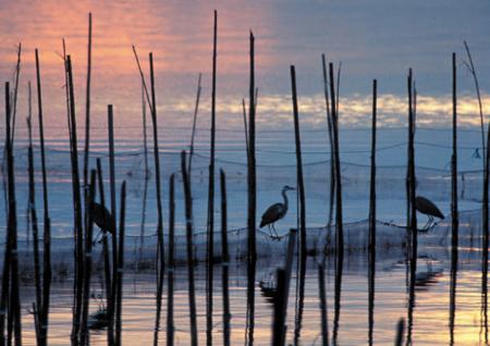 Wetlands Albufera